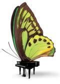 CIPC-Butterfly